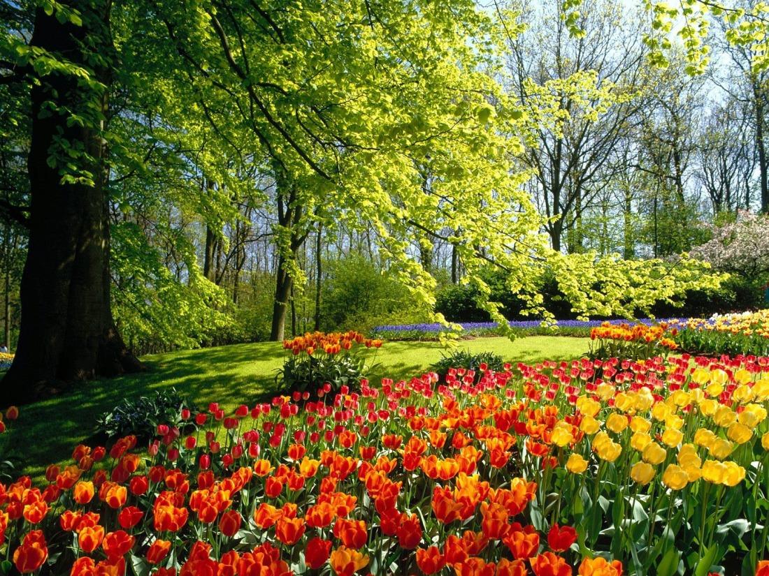 spring-park-1600-1200-3348