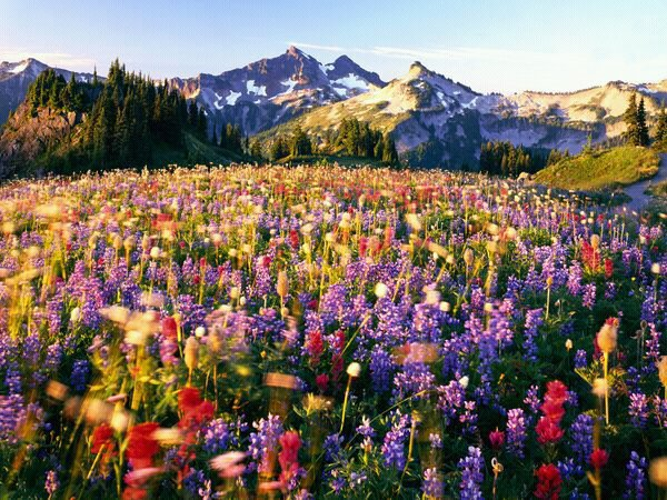 wpid-flowers-Mount-Rainier