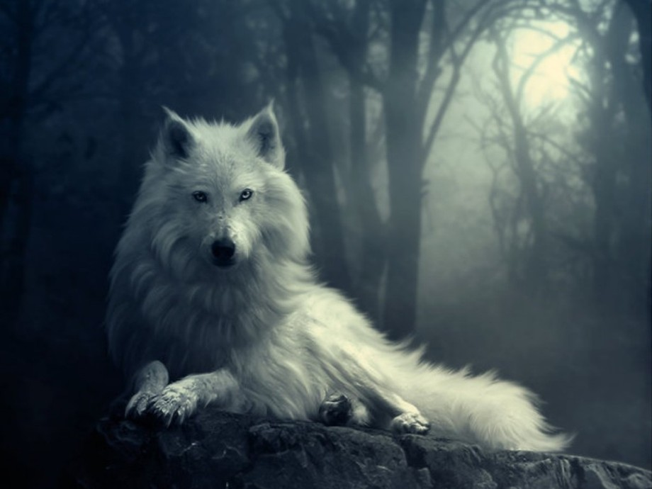 wolf wallpapers HD